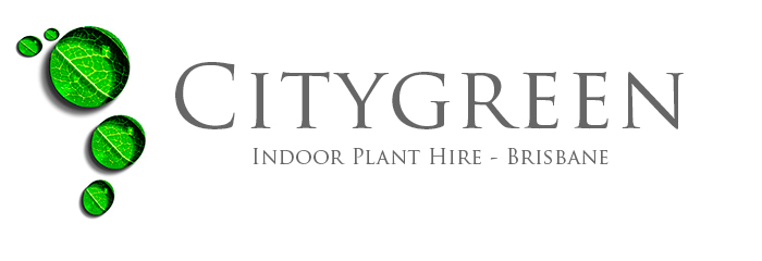 Citygreen Indoor Plant Hire – Indoor Plants for Brisbane & surrounds