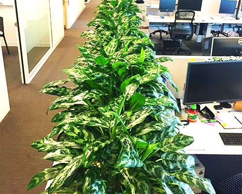 Citygreen Indoor Plant Hire Brisbane - office plants for brisbane and office plant hire in brisbane and indoor gardens for southeast queensland and northern new south wales