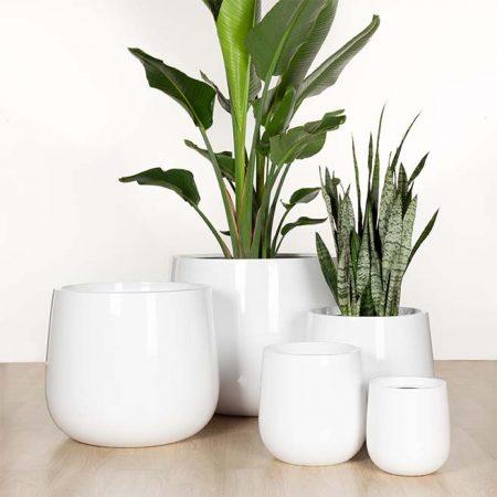 Round Urn- Citygreen Indoor Plants Brisbane