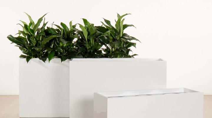 citygreen-indoorplants-troughplanters